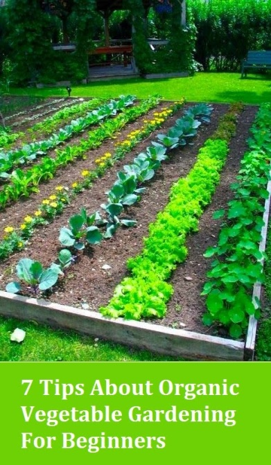 Stimulating thinking patterns writing intended for everybody - Gardening tips for beginners ...